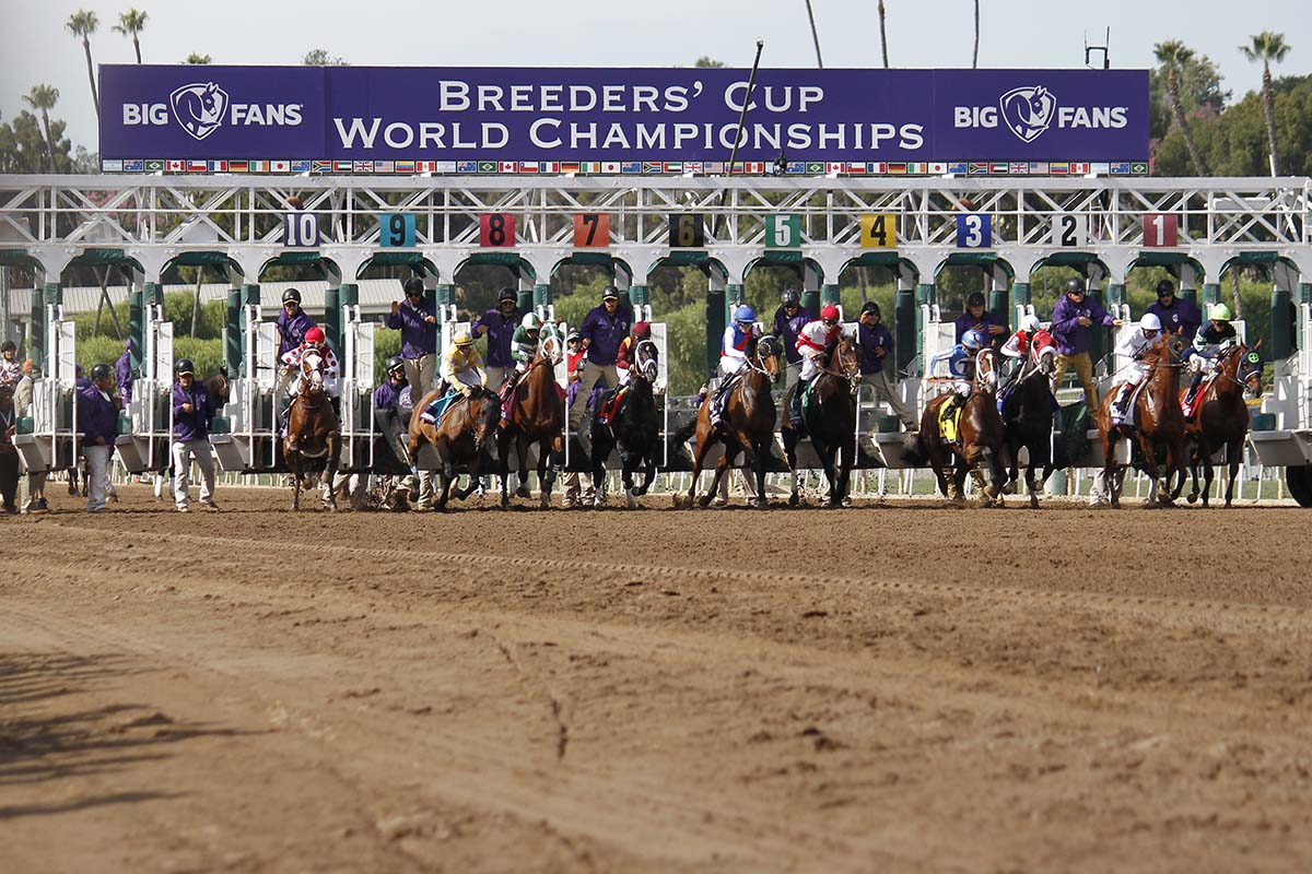 Talk Of The Track Breeders Cup 2019